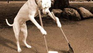 kutya, kutyapiszok